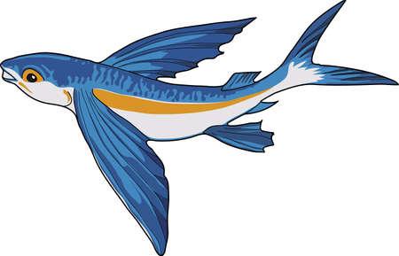 Bleu poisson volant sur un fond blanc. Vecteurs