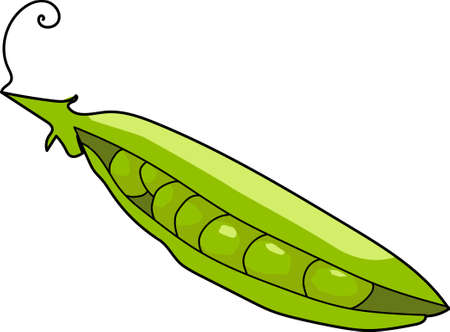 pea pod: The green pea pod with round seeds.