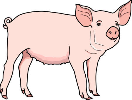 The pink piggy on a white background. Illustration