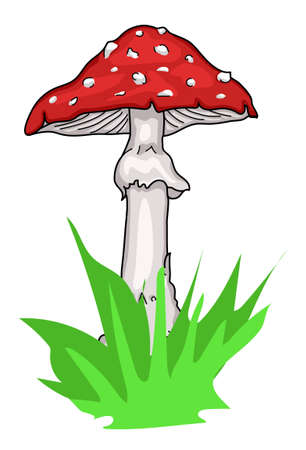 amanita: An amanita mushroom with a red hat.