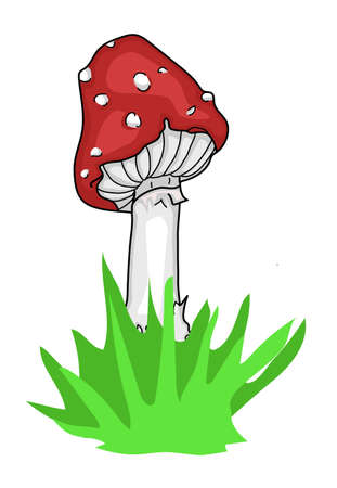 An amanita mushroom with a red hat.