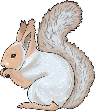 A beige-blue squirrel with a fluffy tail.