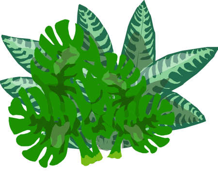 The green bush of fern on a white background.