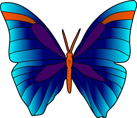 The blue bright butterfly with orange strips. Çizim