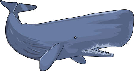The gray big cachalot in a white background. Illustration