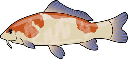 Big fish carp on a white background. Çizim