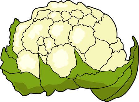 The large cauliflower on a white background. Çizim