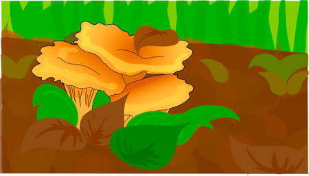 The yellow chanterelles in the green foliage. Çizim