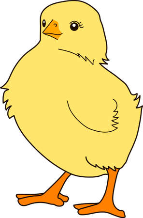 Yellow little fluffy chicken is standing on a white background.