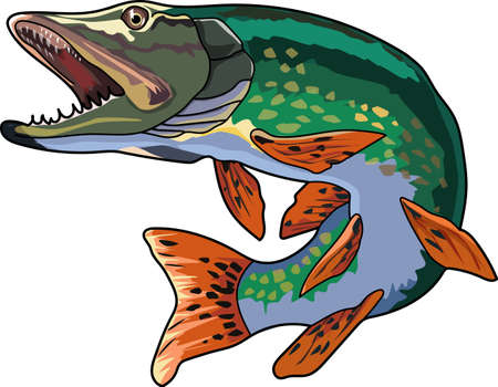 A green pike with a pointed snout and large teeth. Illustration