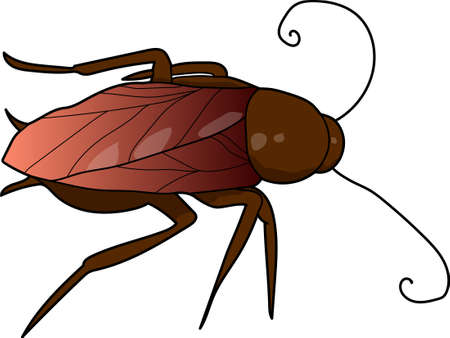 The red cockroach on a white background.