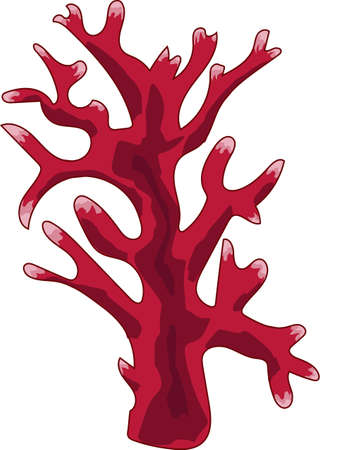 The red branched coral on a white background.