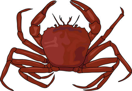 The brown crab on a white background. Çizim
