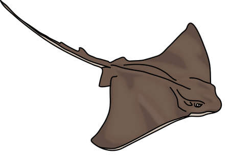 The brown electric stingray on a white background.