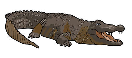 The gray-brown big crocodile on a white background.