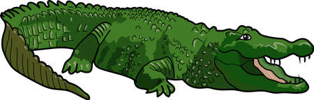 The green big crocodile on a white background.