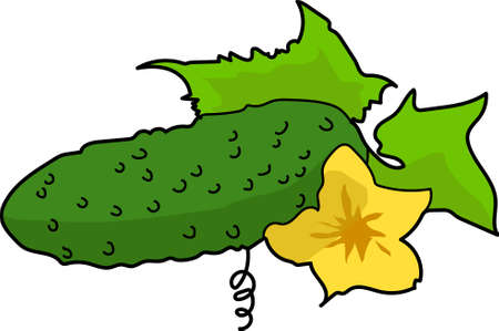 The one green cucumber with leaf and yellow flower. Çizim