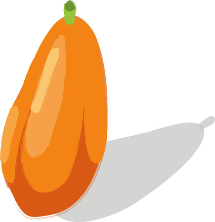 richness: Papaya richness Isolated illustration on white background