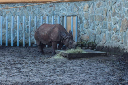 Rhinoceros at Wroclaw Zoo. Poland 版權商用圖片 - 130730930