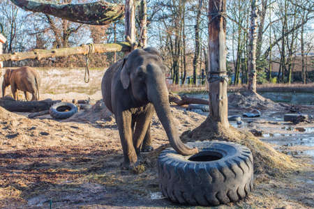 Elephants at the Wroclaw Zoo. Poland 版權商用圖片 - 130730997