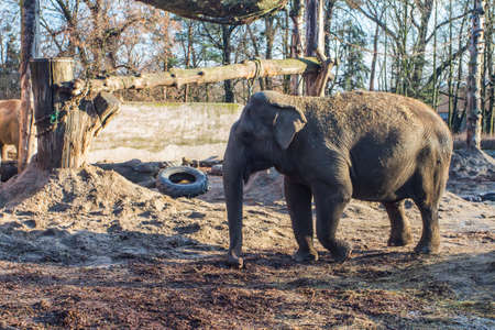 Elephants at the Wroclaw Zoo. Poland 版權商用圖片 - 130731000