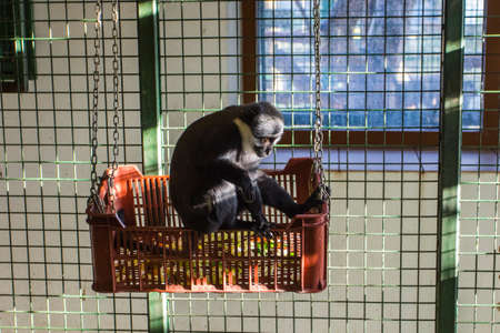 A small monkey in a cage at the Wroclaw Zoo. Poland 版權商用圖片 - 130731036