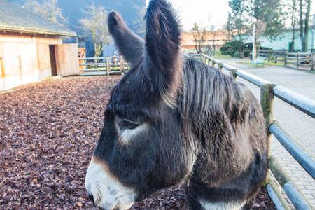 Donkey in the Wroclaw Zoo. Poland 版權商用圖片 - 130731042