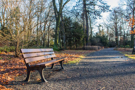 Wooden bench in autumn park in Wroclaw. Poland