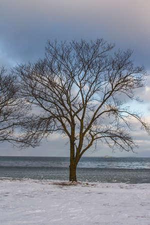 Winter park near the sea in Tallinn. Estonia