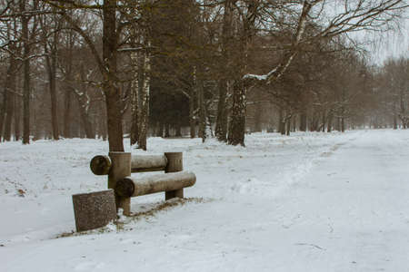 Wooden bench in the park in Tallinn during snowfall in winter. Estonia 版權商用圖片