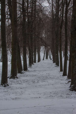 Snowfall in a park in Tallinn in winter. Estonia