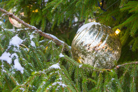 Christmas tree decoration. The ball rests on a spruce branch during the Christmas holidays