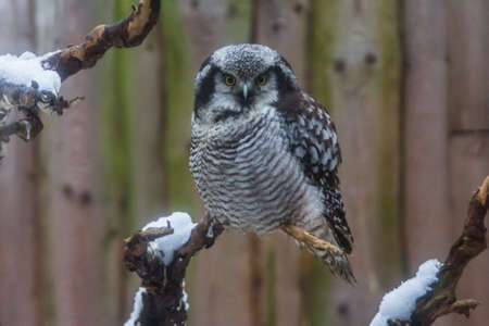 Owl in a cage at the Tallinn Zoo in winter. Estonia