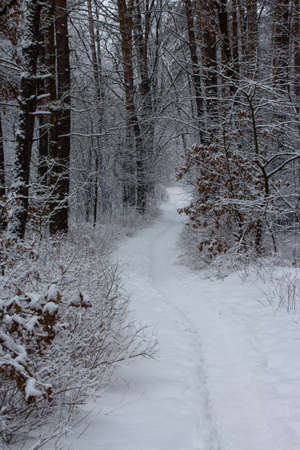 Trail in a snow-covered forest in Kyiv. Ukraine