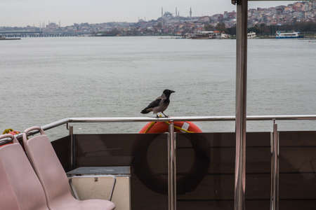 A crow sits on a fence on the deck of a ferry in Istanbul in rainy weather. Turkey