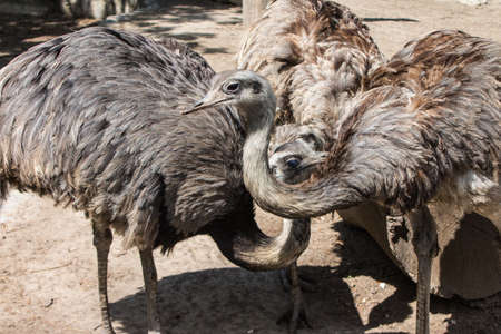 The Emu at the Budapest Zoo. Hungary Stockfoto