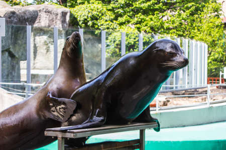 Sea lions at the Budapest Zoo. Hungary