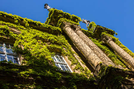 The wall is covered with ivy in Vaidahunyad Castle in Budapest. Hungary