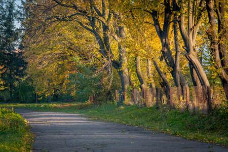 environmen: Magic Trees Stock Photo