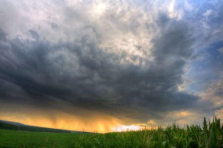 maiz: Nubes de tormenta sobre el campo de ma�z en HDR Foto de archivo