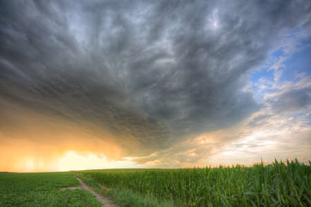 corn rows: Stormy clouds over the corn field in HDR Stock Photo