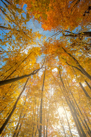 directly below: Autumn has come and all trees and bushes in forest became yellow and orange