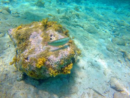 reverent: Underwater Caribbean 21
