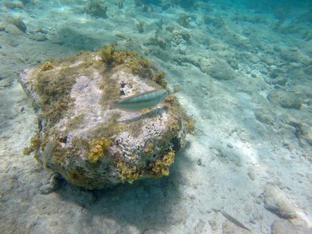 reverent: Underwater Caribbean 19