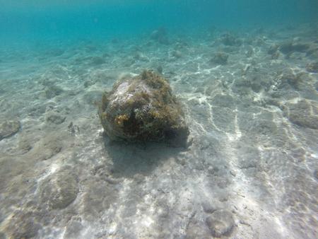 reverent: Underwater Caribbean 18