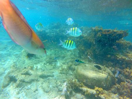 reverent: Underwater Caribbean 12