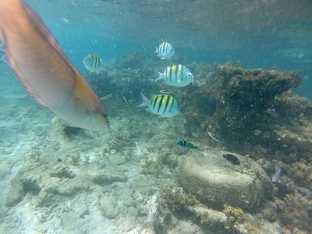 reverent: Underwater Caribbean 11 Stock Photo