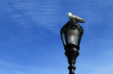 Seagull perched on a lamppost at the harbor  Stock Photo