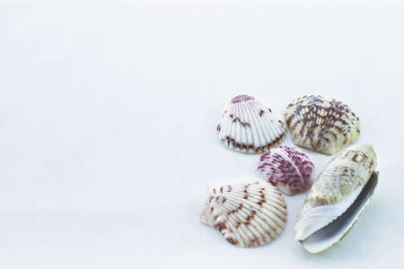 positioned: Five different seashells positioned on blank background  Stock Photo