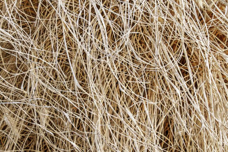 Close detail of the curled fibers of a straw plant  Stock Photo